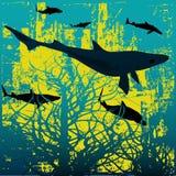 ¡Tiburones! Foto de archivo libre de regalías