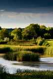 ¡Un lago en el medio de un campo de maíz! Fotos de archivo libres de regalías