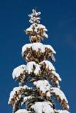 ¡Un montón de conos del pino! Fotografía de archivo