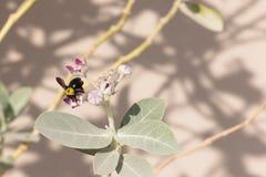 ¡Un trabajo del ` s de la abeja nunca termina! Imágenes de archivo libres de regalías