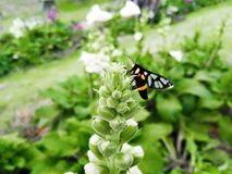 ¡Una mariposa en una flor! Fotografía de archivo