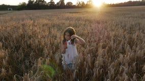 ¡Una niña en un campo de trigo en las burbujas de jabón de la puesta del sol que soplan! metrajes