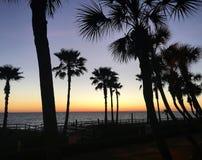 ¡Una qué visión! Palmas majestuosas en el Golfo de México en la puesta del sol foto de archivo