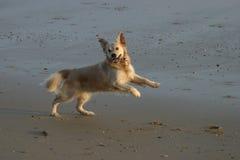 ¡Yippee! Fotografía de archivo