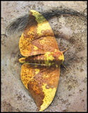 ¤ sight ¤. Photomanipulation of my eye and of a moth stock photo