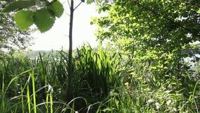180° panorama op vegetatie stock videobeelden