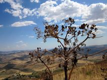 °the coutryside of the sicilian hinterland. August in sicily,  among scrubland, snails and vegetation Stock Photography