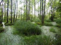 ¼ del owieÅ del 'de BiaÅ un parque nacional Bielorrusia Fotografía de archivo