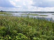 ¼ del owieÅ del 'de BiaÅ un parque nacional Bielorrusia Foto de archivo