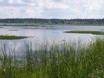 ¼ del owieÅ del 'de BiaÅ un parque nacional Bielorrusia Imagen de archivo