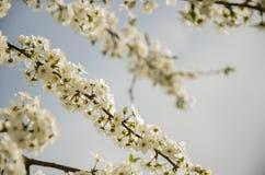 ½ иÐ?/floración del 'Ð?Ð del ² Ð?Ñ de ЦРfoto de archivo libre de regalías
