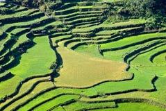 ½ del terraceï del arroz Fotos de archivo