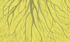 ¿Brunches o raíces? fotos de archivo libres de regalías