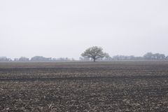 ¿Dónde ` s las cosechas de la primavera? Fotos de archivo libres de regalías