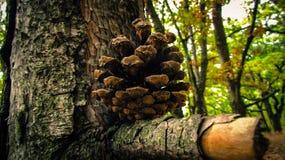 ¿Esponja de equilibrio? foto de archivo libre de regalías