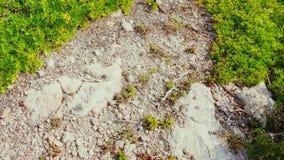 ¿Manche el lagarto - donde es él? imagen de archivo