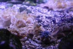 ¿Puede usted verme? Medusas secretas imagenes de archivo