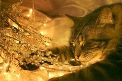 ¿Visiones de los ratones del azúcar? Foto de archivo libre de regalías