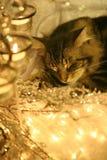 ¿Visiones de los ratones del azúcar? Imagenes de archivo