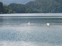 ×美丽的湖 库存照片