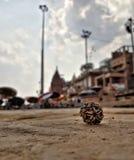 beads of shiva stock image