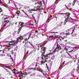 ะWhite and pink background from Common Map Butterflies Stock Photography