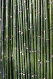 ฺฺBamboo Royalty Free Stock Photos