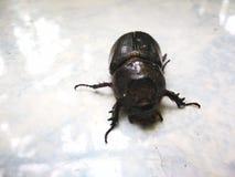 ฺBaby象鼻虫在庭院里 库存照片