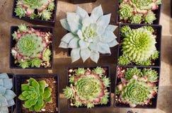 ชืˆà¸ de mengeling à ¹ van kleurrijke helder en versheid succulents nam inzameling in kleine potten op concrete achtergrond t Stock Fotografie
