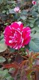 ดอกไม้ stock images