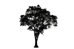 ิฺTree silhouettes 07 royalty free stock image
