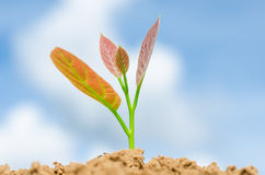 �Young plant Royalty Free Stock Photos