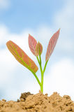 �Young plant Stock Photo