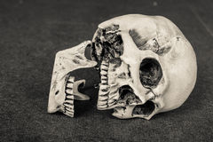 �ีHuman skull lean on wooden board background Stock Photo
