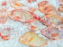 à ¹ ŒNile罗非鱼在销售中的鱼场面在市场上 免版税库存图片