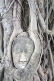 ฺีBuddha головные в дереве Стоковые Изображения