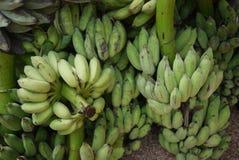 ฺีBundles av bananen Arkivbilder