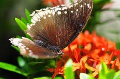 ฺà¸'Butterfly stockfoto