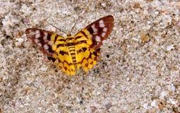 ฺีButterfly Fotografia de Stock