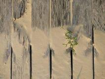 """à¸žà¸·à ¹ ‰ à¸™à ¹ """"ภ¡ à ¹ ‰ slatted podłoga Fotografia Stock"""