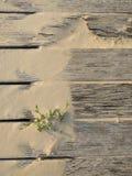 """พื,golv för ‰ för ¹ för à för ¡ för ภför """"för ¹ för นà för ้ spjälat Royaltyfri Foto"""