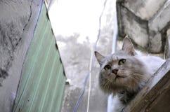 à ¹ ‡ à ¹ ‡ διστάζει γάτα Στοκ εικόνες με δικαίωμα ελεύθερης χρήσης