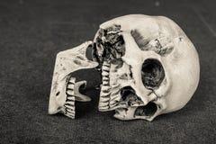 à ¹ ‡ ีHuman在木板背景的头骨倾斜 库存照片