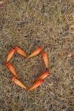 à ¹在草背景的‰心脏 库存照片