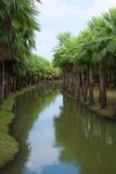 ฺBeautiful棕榈庭院和运河 图库摄影