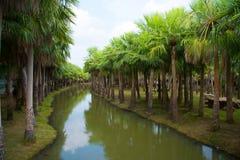 ฺBeautiful棕榈庭院和运河 免版税图库摄影