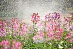 ฺBeautiful λουλούδια Στοκ Φωτογραφίες