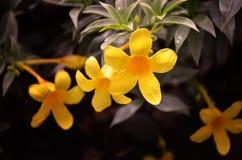 ฺBeautiful цветки стоковое изображение