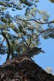 ฺBig drzewo Obrazy Stock