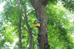 ฺBird dom na drzewie fotografia royalty free